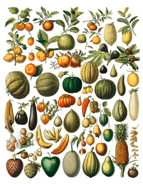 Botanical Autumn Harvest Printable