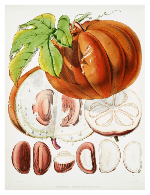 Botanical Pumpkin Printable