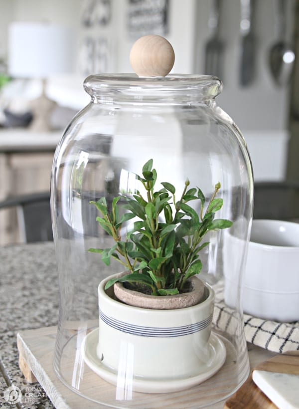 Glass Cloche diy rustic decor with a plant inside.